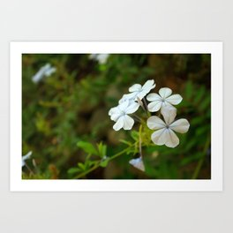 White little flower Art Print