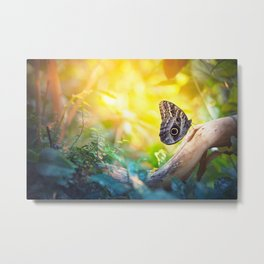 Butterfly in the forest Metal Print