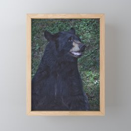 Black Bear Portrait Framed Mini Art Print