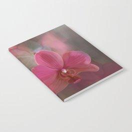 Paleonopsis Notebook