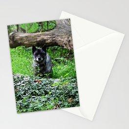 Norwegian Elkhound  Stationery Cards