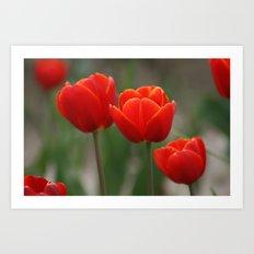 Red Orange Tulip Art Print