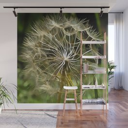 Tragopogon Wildflower Salsify Wall Mural