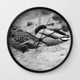 Dabbling Ducks Wall Clock