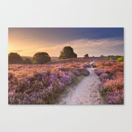 I - Path through blooming heather at sunrise, Posbank, The Netherlands Canvas Print