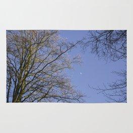 Moon in blue evening sky between Beech trees (Fagus sylvatica). Norfolk, UK Rug