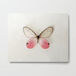 Pink Glasswing  Metal Print