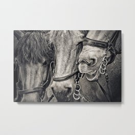 Three Horses Photographic Black and White Portrait Metal Print