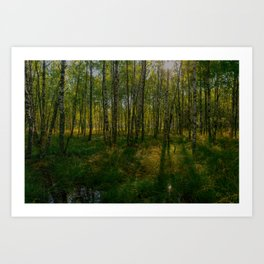 Birch forest summer in the morning sun Art Print