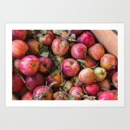 Pile of freshly picked organic farm apples with imperfections Art Print