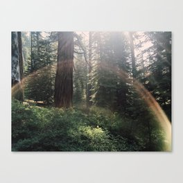 Fairytale Forest - Yosemite Canvas Print