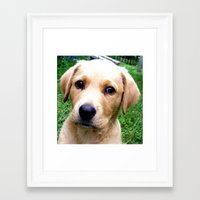 jake Framed Art Prints featuring Jake  by North 10 Creations