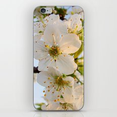 Cherry Blossom Flowers iPhone & iPod Skin