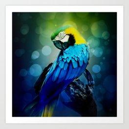 Macaw on branch Art Print