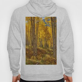 Autumn Aspen Forest Aspen Colorado Hoody