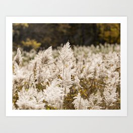 Phragmite in Freehold Art Print