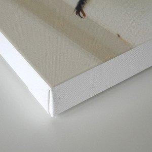 robber flies in love IV Canvas Print