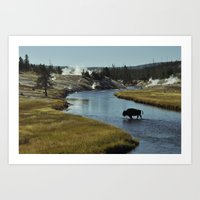 Epic Bison Art Print