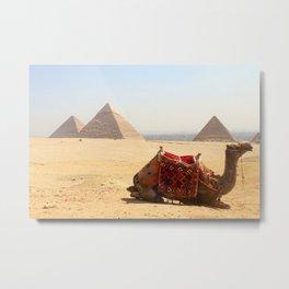 Cairo Camel Metal Print