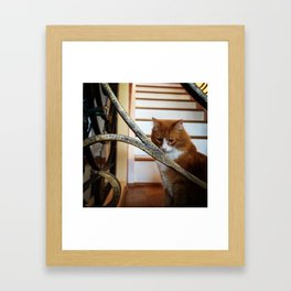 kitty: deep in thought Framed Art Print