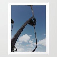 Crooked Palm Trees II Art Print