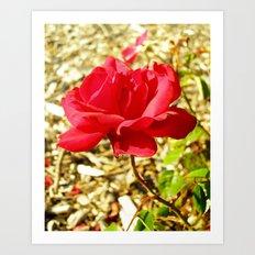 roses XV Art Print