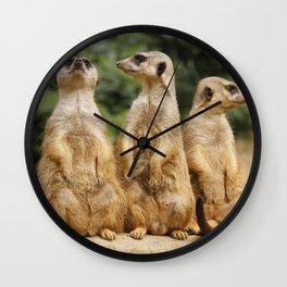 Meerkat20151204 Wall Clock