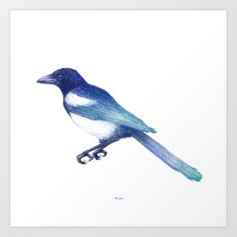 Magpie (Pica pica) - blue and turquoise Art Print