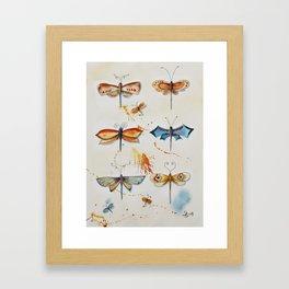 Butterflies 2 Framed Art Print