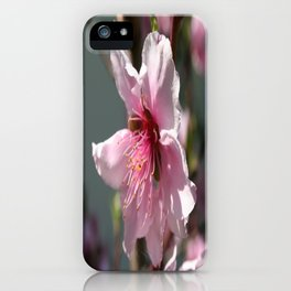 Close Up of Peach Tree Blossom iPhone Case