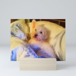 Ivan the Dog Schnoodle in Bed Mini Art Print