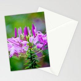Purple Spider Flower Stationery Cards