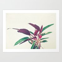 Prayer Plant II Art Print