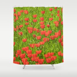tulips field Shower Curtain