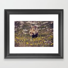 Summer Fox Framed Art Print