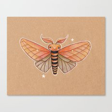 Un-Natural Selection: Carmine Stripee Halloween Moth Canvas Print