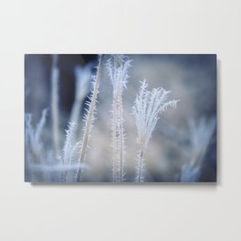 Cold Hoarfrost on the weeds in the winter Metal Print