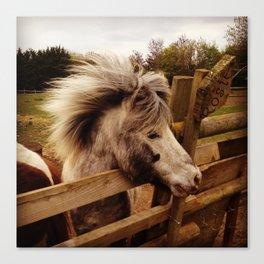 Windswept Pony Canvas Print