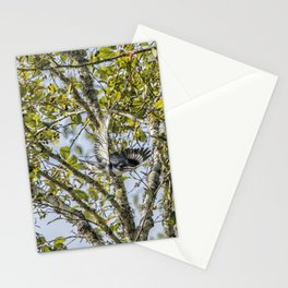 Belted Kingfisher in Flight, No. 1 Stationery Cards