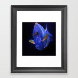 Blue Tang 2 Framed Art Print