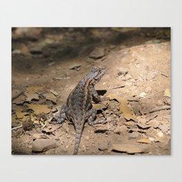 Lizard on the path Canvas Print