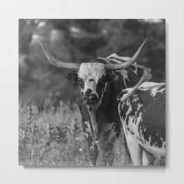 Staredown in the pasture - Black and White Metal Print