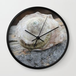 Rocky Shell Wall Clock