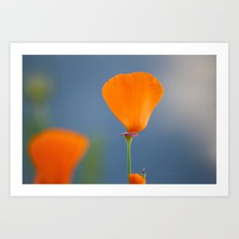 California Poppy Dreaming Art Print