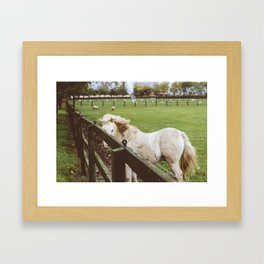 Horse in Athy, Ireland Framed Art Print