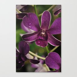 Flowers of the World Take2 Canvas Print