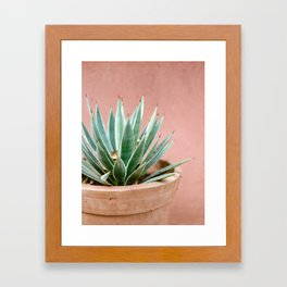Succulent in Ourika | Morocco fine art travel photography - pastel tones. Framed Art Print