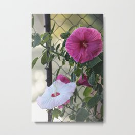 Hibiscus Flower of Many Colors Metal Print