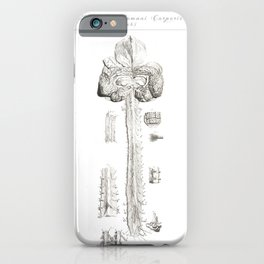 Human Anatomy Art Print BRAIN SPINAL CORD Vintage Anatomy, doctor medical art, Antique Book Plate, M iPhone Case