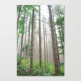 Look up: Forest view. Canvas Print